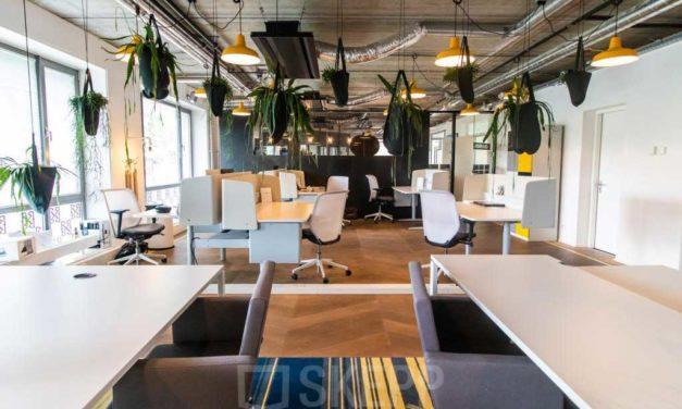 Die Effekte von Büropflanzen am Arbeitsplatz